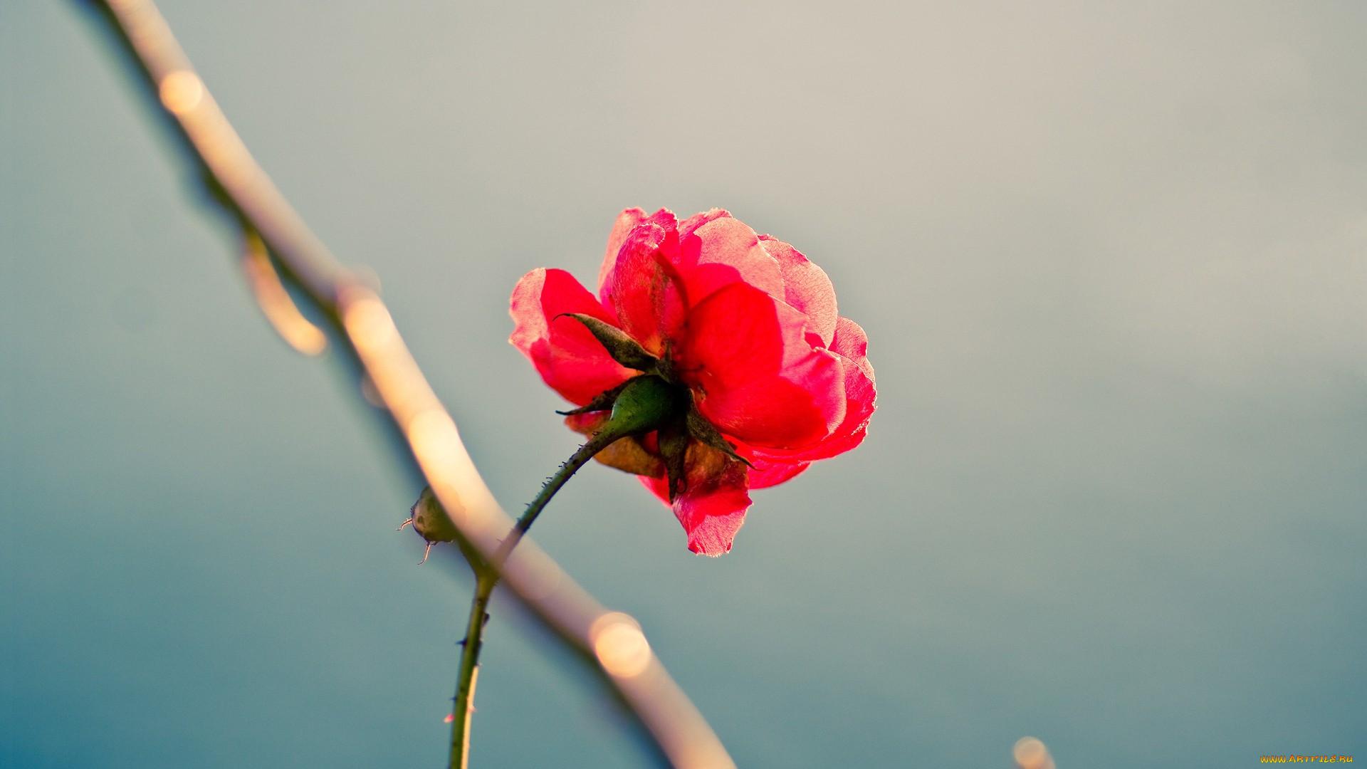 Фотография красивого одинокого цветка удостоверение выдается